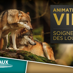 VIP LOUPS : officiel